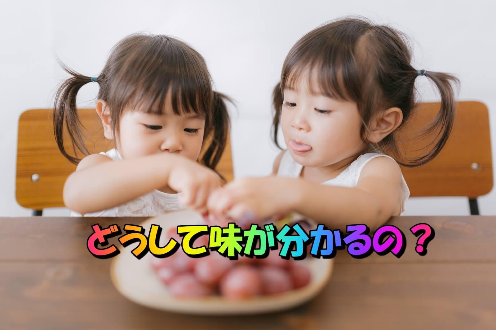 人体の不思議:味が分かる仕組み。料理の見た目も味覚に変化を与える。